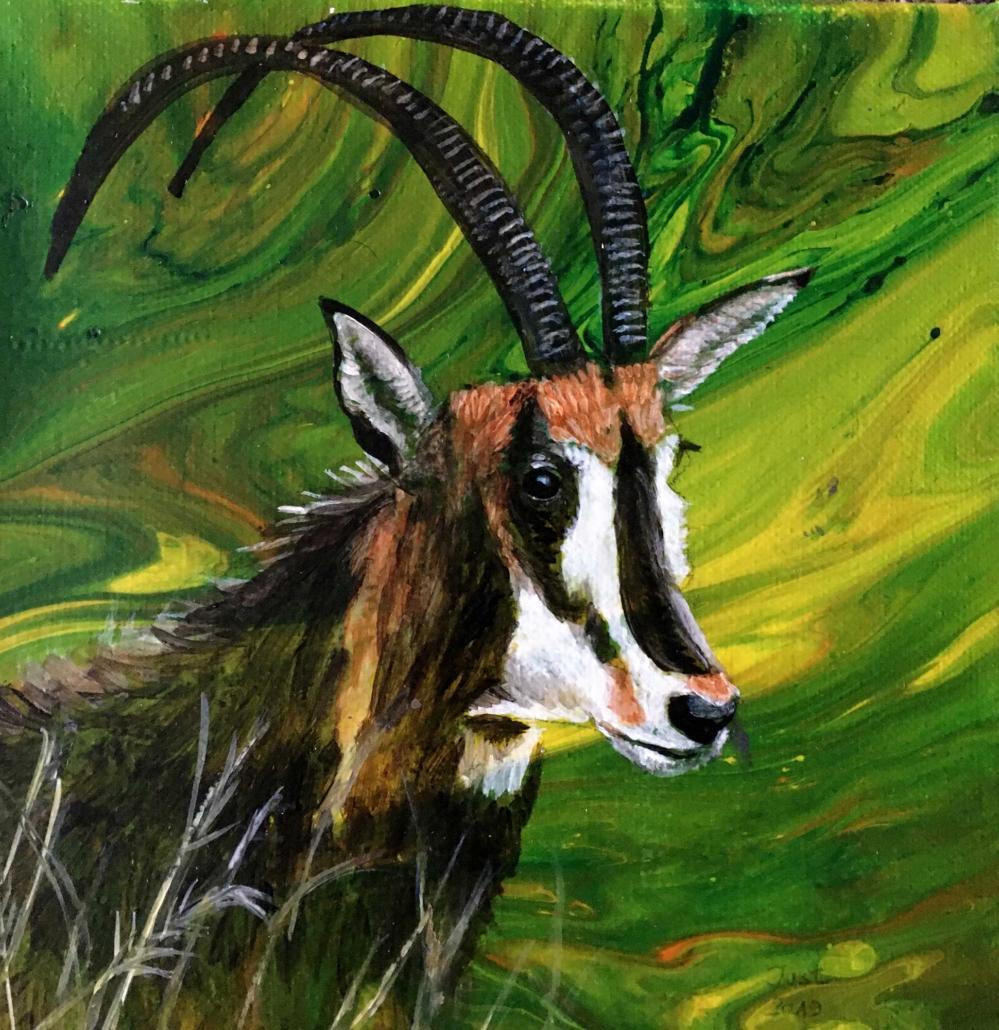 Antilope 2019