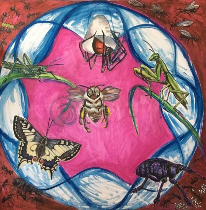 Die Welt der Insekten - 2020